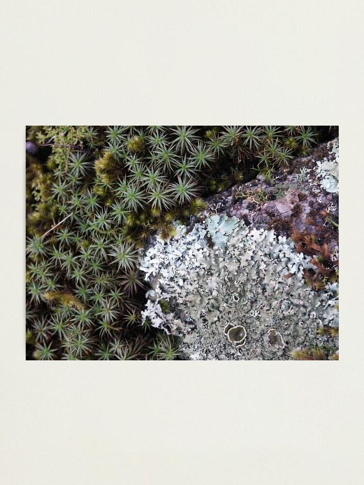 Alternate view of Lichen & Moss Photographic Print