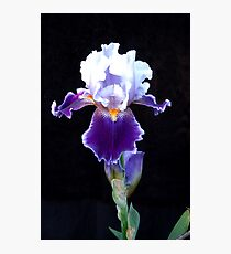 Bearded Iris Photographic Print
