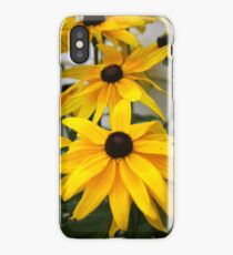 Black Eyed Susan Flower  iPhone Case