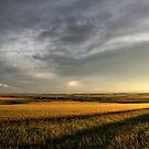 Prairie Gold by Tracy Friesen