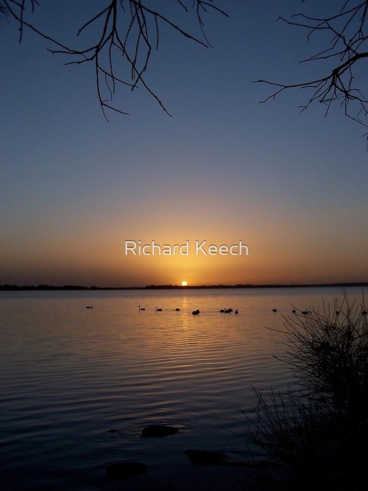 Swans by Richard Keech
