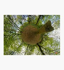 Butterfly Sculpture in Prehen Woods, Derry Photographic Print