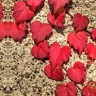 Cute Heart-Shaped Red Fall Vine Leaves by Beverly Claire Kaiya