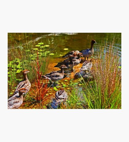 Ducks At The Pond Photographic Print