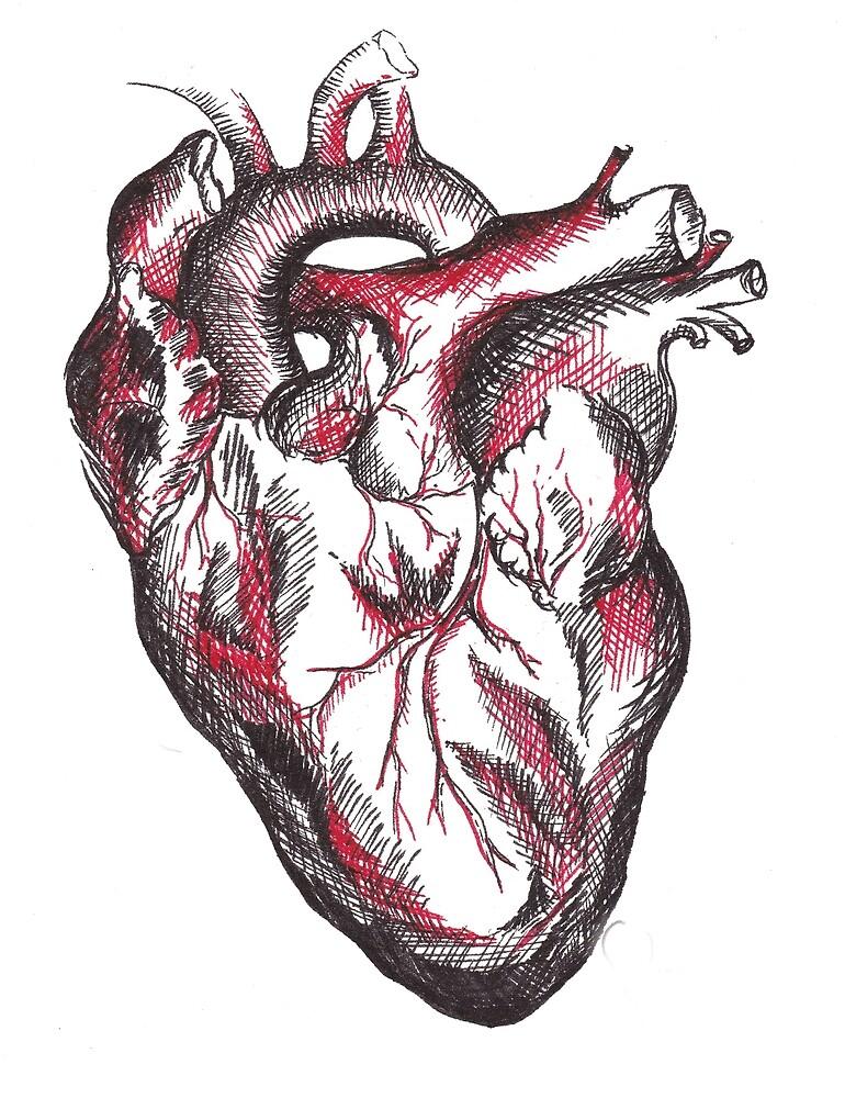 Anatomical Drawing of a Human Heart by mugs-munny