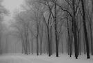 Clay County Park by Dawne Olson