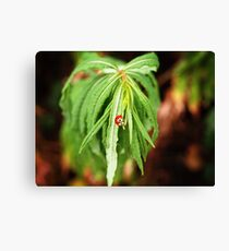 The Lonely Ladybug Canvas Print