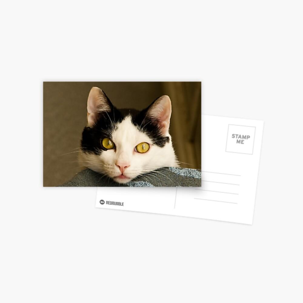 Cat eyes Postcard