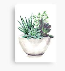 Succulents Metalldruck