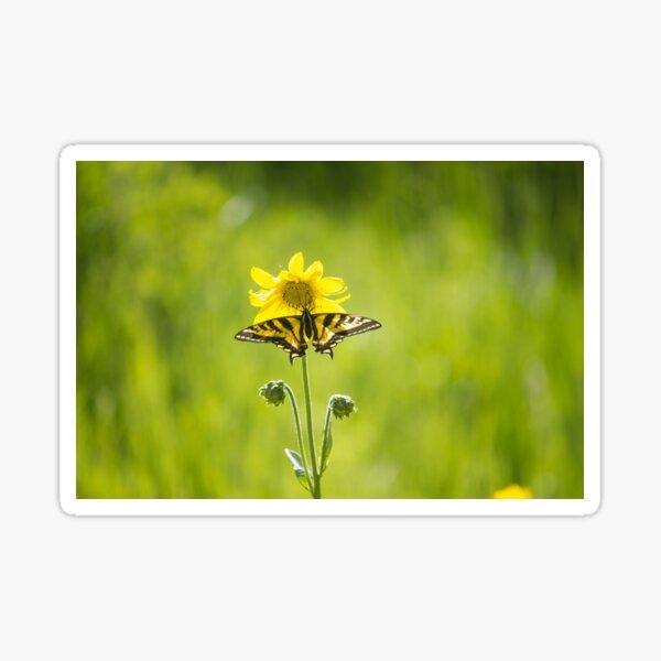 Swallowtail Sun Flower Sticker