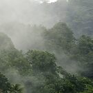 Rainforest Mist - Pohnpei, Micronesia by Alex Zuccarelli