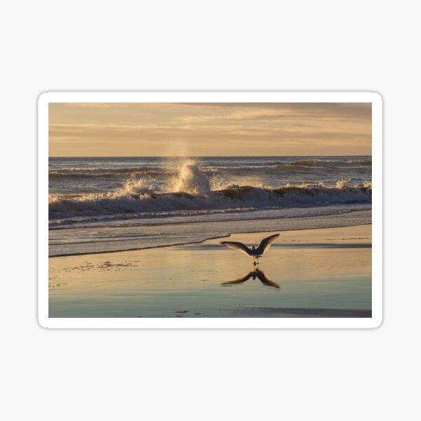 Seagull Sunset Sticker