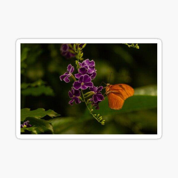 Butterfly Bloom Sticker
