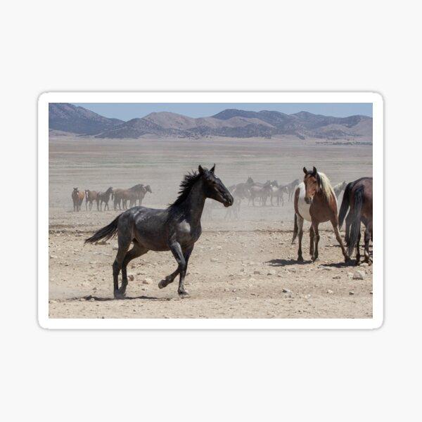 Young Horse in Onaqui Sticker