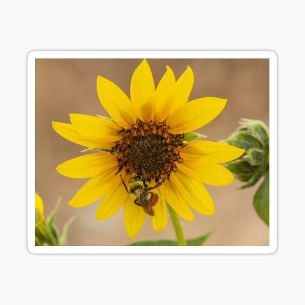 Bee a Sunflower Sticker