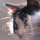 Fur Collar by gothgirl