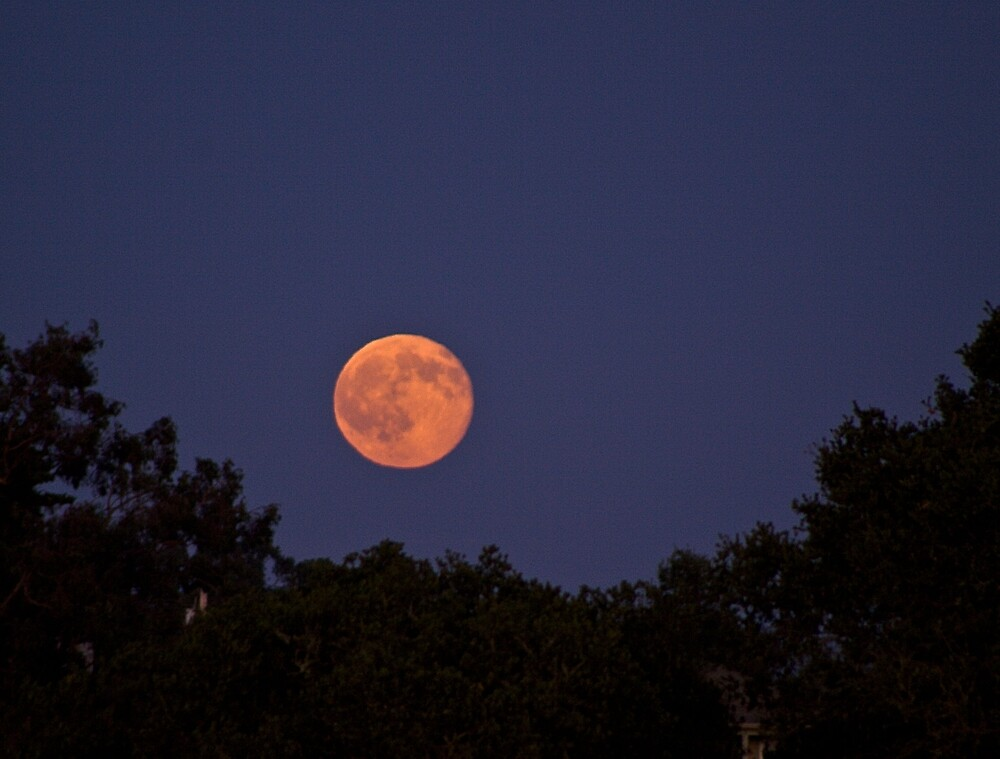 full moon rising by David Chesluk