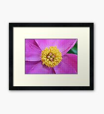 Pink and Yellow Peony Framed Print