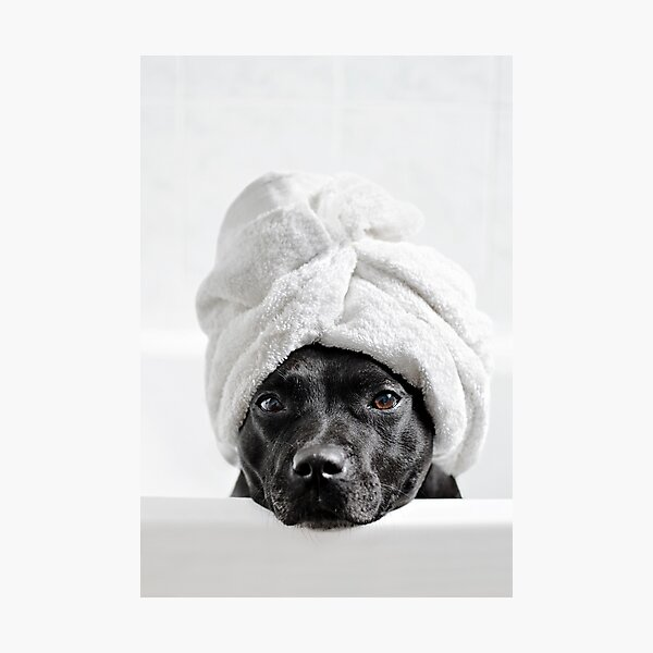 Bath Time Photographic Print