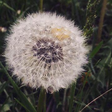 Dandelion Puff by AbbyLevi