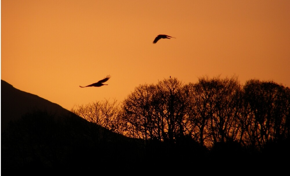 Twilght Birds - Derry Ireland  by mikequigley