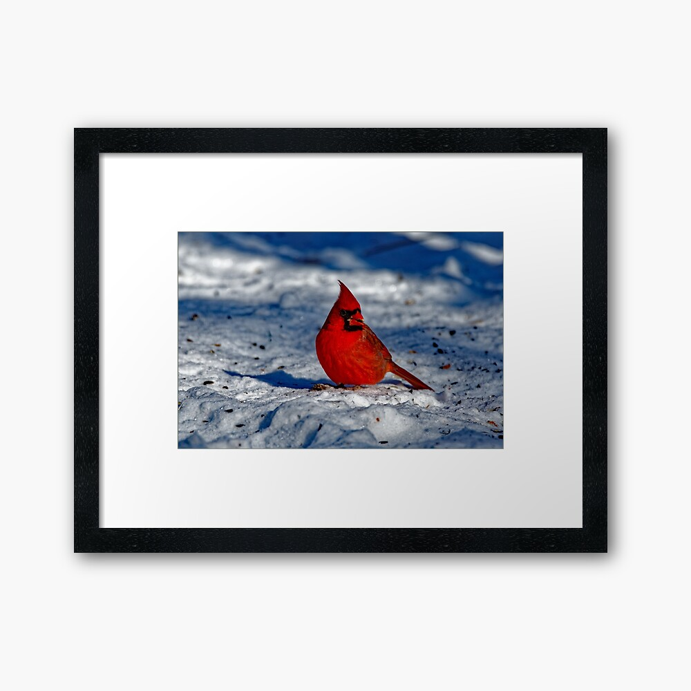 Male Northern Cardinal in the Snow Framed Art Print