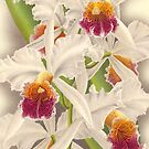 Orchid by madewithslnsw