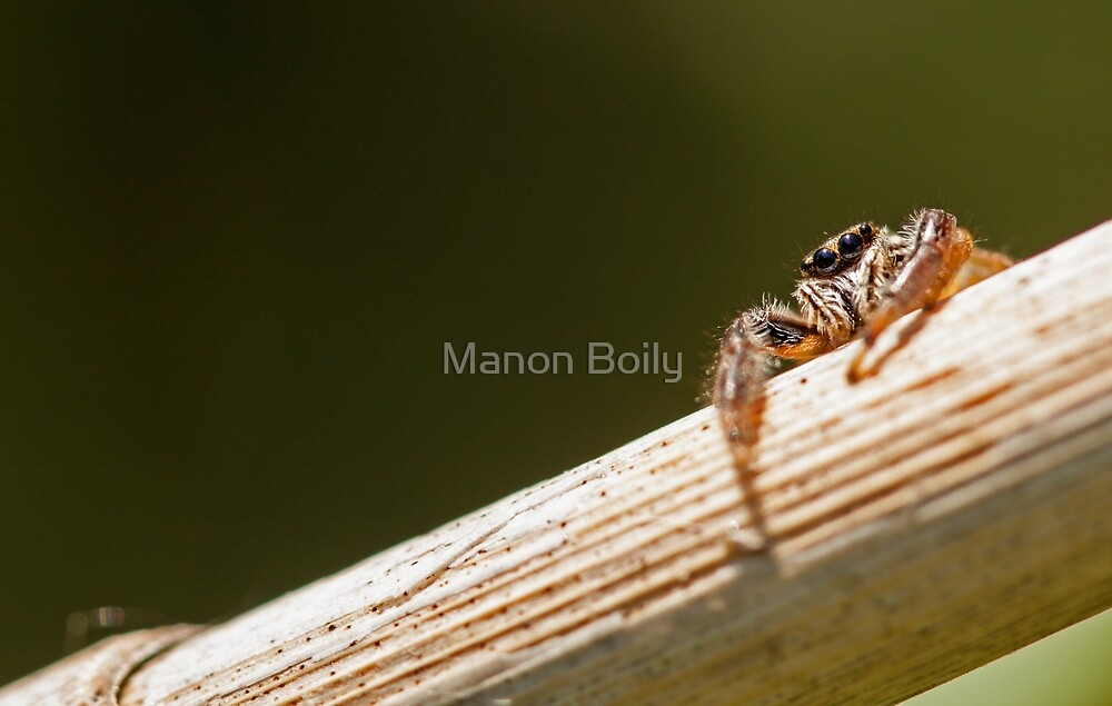 I see you by Manon Boily