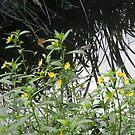 Creek Bloomers by Navigator