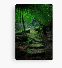 Mother Earth - Tarkine Rainforest Canvas Print