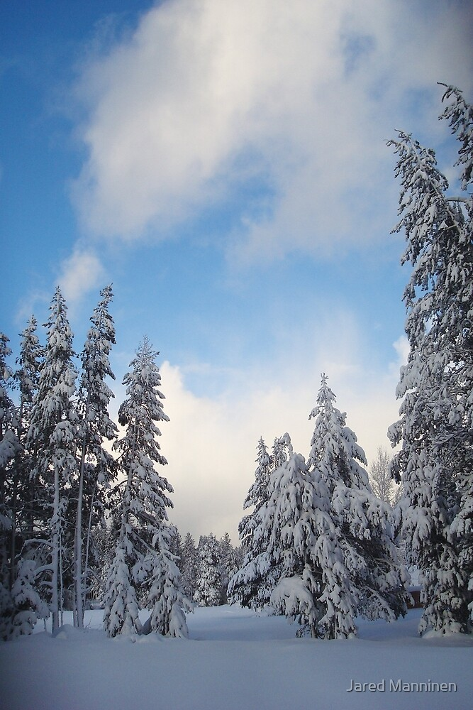 Snow-flocked Trees by Jared Manninen