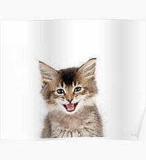 Cute Tabby kitten laughing Poster