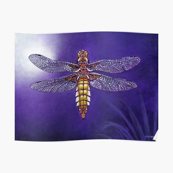 dragonfly broad bodied chaser painting Poster