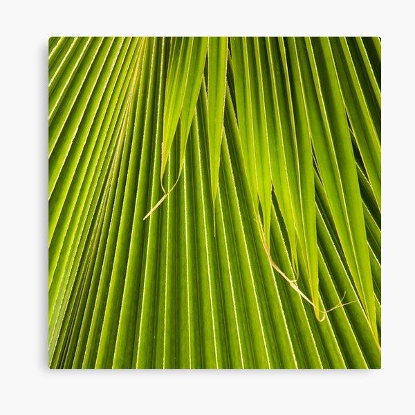 Palm Frond Canvas Print