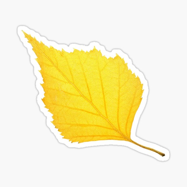 Autumn birch leaf Sticker