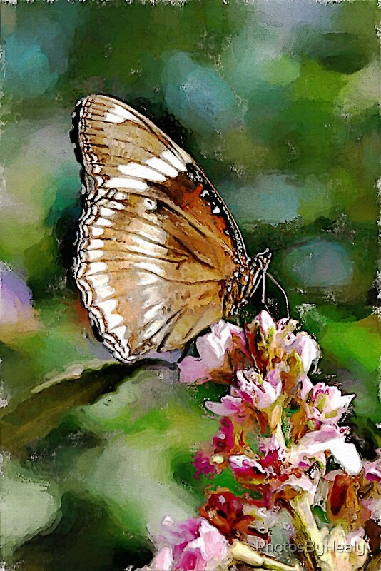 Clipper Butterfly - watercolour by Photos by Healy