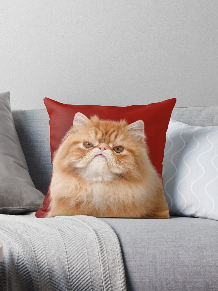 Grumpy Red Persian Cat by ArdeaOnline