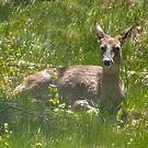 """""""En-deer-ing Doe"""" by sundawg7"""