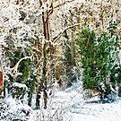 Woodland Snow by Vicki Field