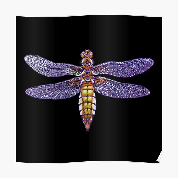 Dragonfly broad bodied chaser painting2 Poster