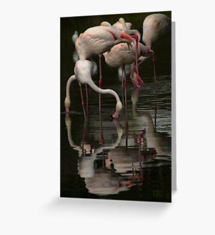 More Flamingos Greeting Card