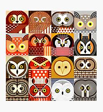 North American Owls Photographic Print