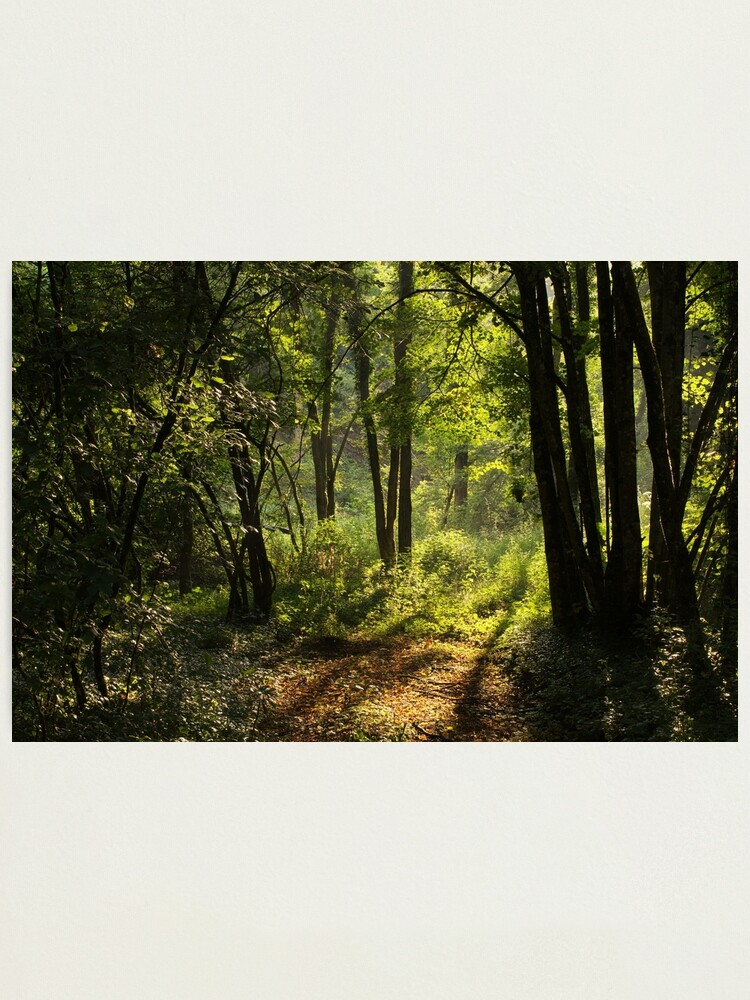 Alternate view of Summer light in the forest Photographic Print