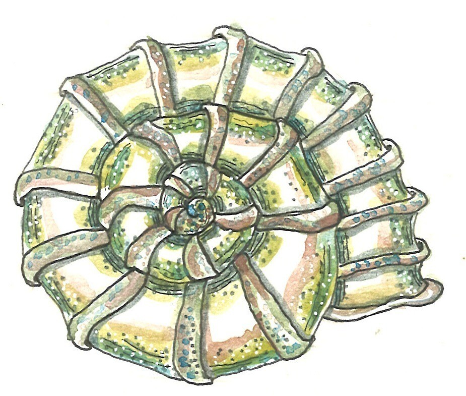 «Caracola Twister» de laramaktub