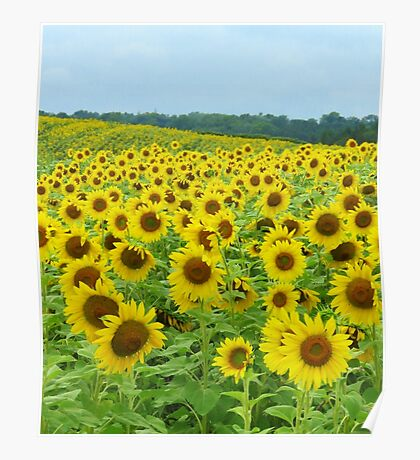 Sunflowers to  Brighten Your Day  Poster