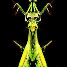 mantis king by tinncity