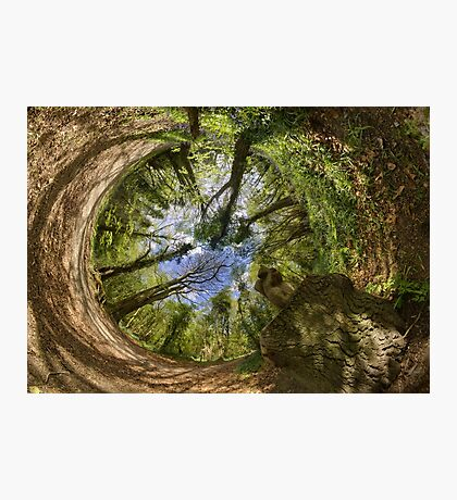 Squirrel Sculpture in Prehen Woods, Derry - Sky In Photographic Print