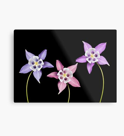 Aquilegia Flower Metal Print