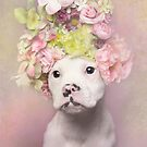 Flower Power, Tucker by Sophie Gamand