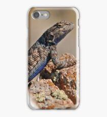 Blue Bellied Lizard iPhone Case/Skin